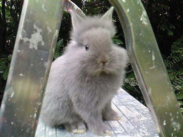 ons konijn